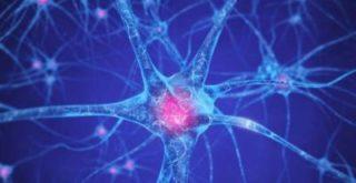 Brain mechanisms in drug addiction new brain pathways revealed